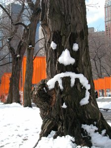 The Gates - Central Park 02-2005 085