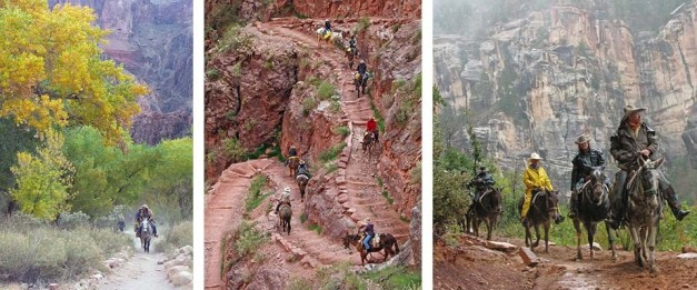 gran canyon mules on steps